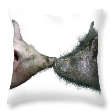 Kissing Pigs Throw Pillow
