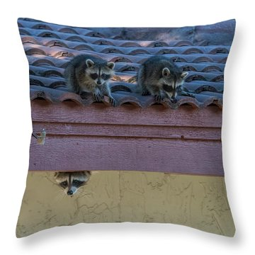 Kits On The Roof Throw Pillow