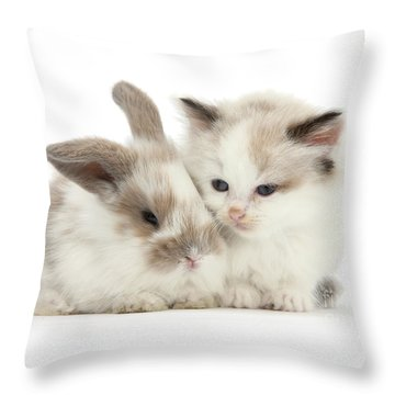 Kitten Cute Throw Pillow
