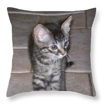 Martius Kitten Throw Pillow