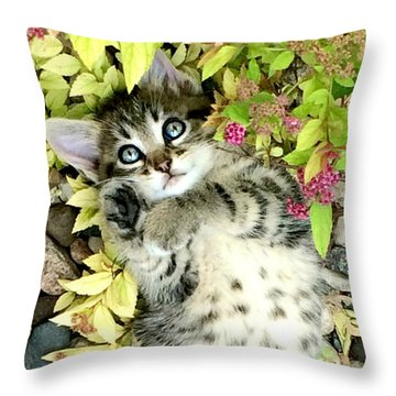 Kitten Dreams Throw Pillow by Kathy M Krause