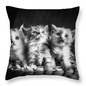 Kitten Trio Throw Pillow