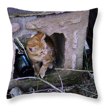 Kitten In The Junk Yard Throw Pillow