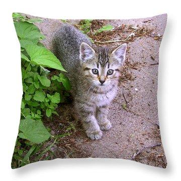 Kitten On The Patio Throw Pillow