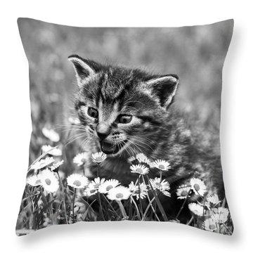 Kitten With Daisy's Throw Pillow