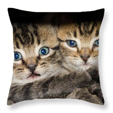 Kittens In The Shadow Throw Pillow