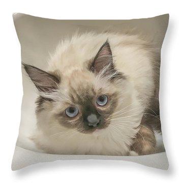 Kitty Blue Eyes Throw Pillow