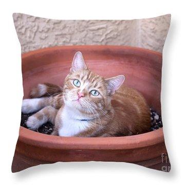 Kitty Bulbs Throw Pillow