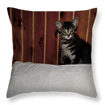 Throw Pillow featuring the photograph Kitty by Laura Melis