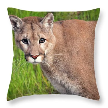 Kitty Look Throw Pillow
