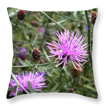 Knapweed Throw Pillow by Danielle R T Haney