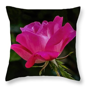 Knock-out Rose Throw Pillow