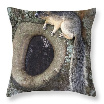 Knot A Squirrel Throw Pillow