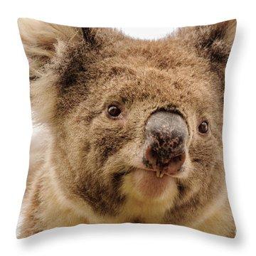 Koala 4 Throw Pillow by Werner Padarin