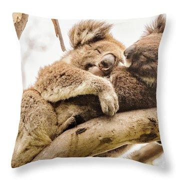 Koala 5 Throw Pillow by Werner Padarin