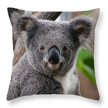 Koala Bear 7 Throw Pillow