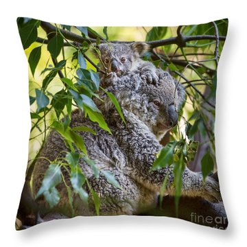 Koala Joey Throw Pillow