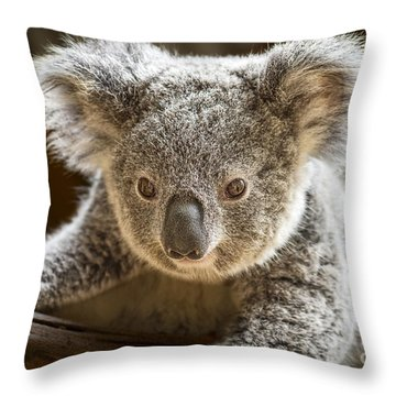 Koala Kid Throw Pillow