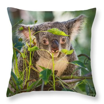 Koala Leaves Throw Pillow