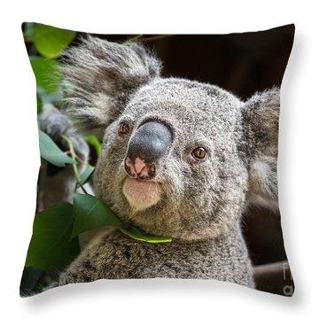 Koala Male Portrait Throw Pillow by Jamie Pham