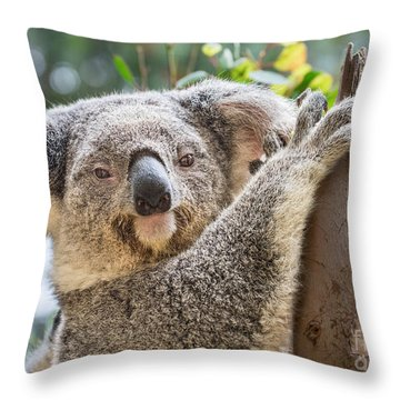 Koala On Tree Throw Pillow