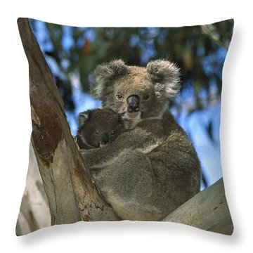Koala Phascolarctos Cinereus Mother Throw Pillow