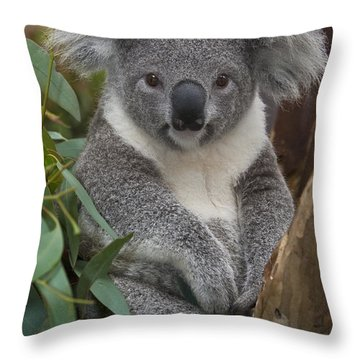 Koala Phascolarctos Cinereus Throw Pillow