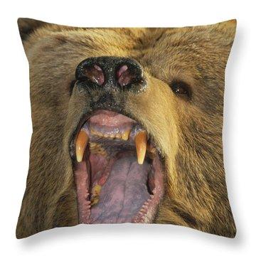 Kodiak Bear Ursus Arctos Middendorffi Throw Pillow by Matthias Breiter