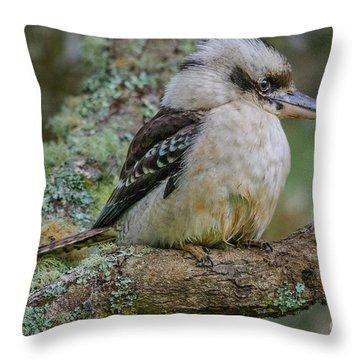 Kookaburra 4 Throw Pillow