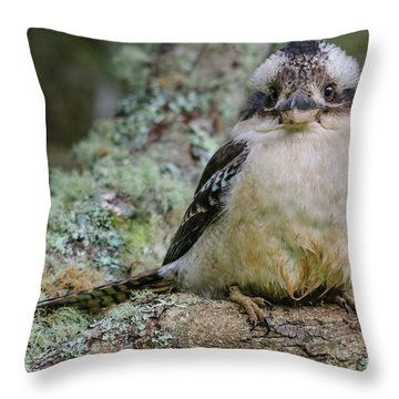 Kookaburra 3 Throw Pillow