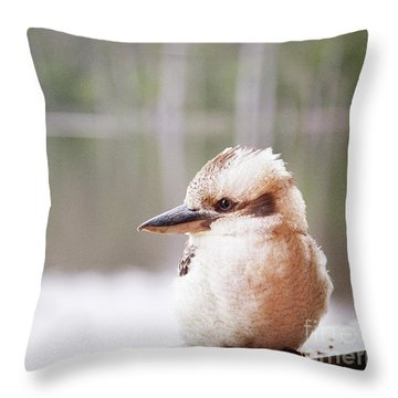 Throw Pillow featuring the photograph Kookaburra by Ivy Ho