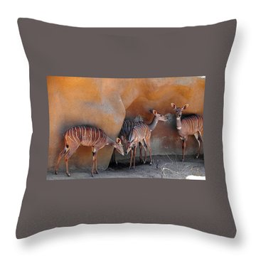Kudu Family Gathering Throw Pillow