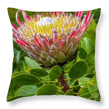 Kula Breeze Throw Pillow