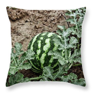 Ky Watermelon Throw Pillow