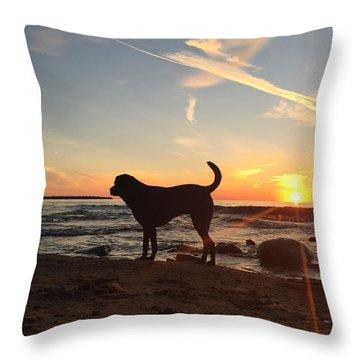 Throw Pillow featuring the photograph Labrador Dreams by Paula Brown