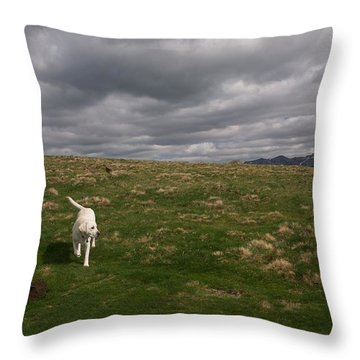 Labrador In French Countryside Throw Pillow by Louise Fahy