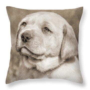 Throw Pillow featuring the photograph Labrador Retriever Puppy Gaze Sepia by Jennie Marie Schell