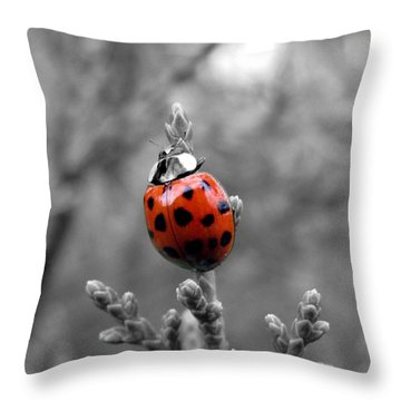 Lady Bug Throw Pillow by Misha Bean
