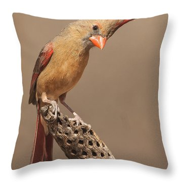 Lady Cardinal And Cholla Throw Pillow by Ruth Jolly