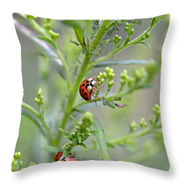 Throw Pillow featuring the photograph Ladybug Ladybug... by Lila Fisher-Wenzel