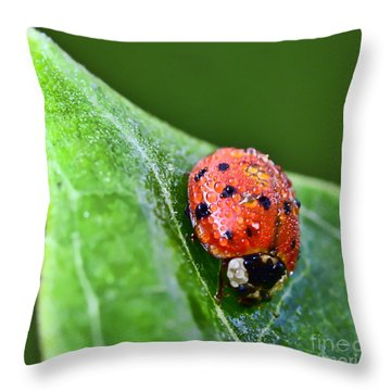 Ladybug With Dew Drops Throw Pillow