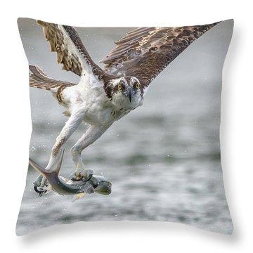 Ladyfish Throw Pillow by Jim Gray