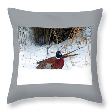 Throw Pillow featuring the photograph Lake Country Pheasant 2 by Will Borden