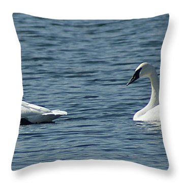 Throw Pillow featuring the photograph Lake Visiters by Rick Friedle