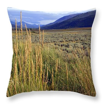 Lamar Valley 2 Throw Pillow by Marty Koch
