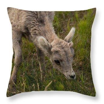 Little Lamb's Lunchtime Throw Pillow by John Roberts