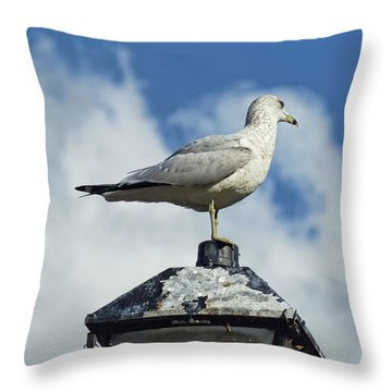 Throw Pillow featuring the photograph Lamp Post Eddie by Jan Amiss Photography