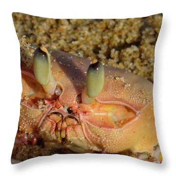 Lamu Island - Crab - Close Up 1 Throw Pillow