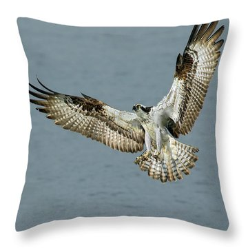 Osprey Approach Throw Pillow