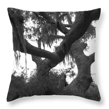 Lands End Talking Tree Throw Pillow